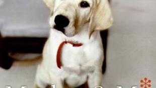 A sztár szerint még egy kutya is könnyebben idomítható, mint saját anyja