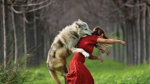 Farkas támadt a piros ruhás lányra