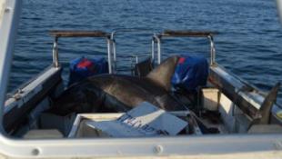 Beugrott egy cápa a hajóba