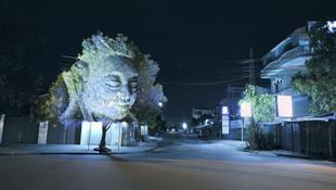Életre keltek a kambodzsai fák