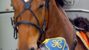 Lehasznált lovakat és fegyvereket árusit ki a honvédelmi tárca