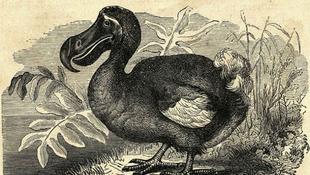 Mi pusztítottuk ki a dodót