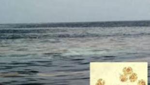 Mérgező a tenger Nápolynál