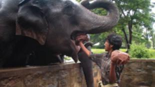 Mostantól büntetik az elefánt etetést