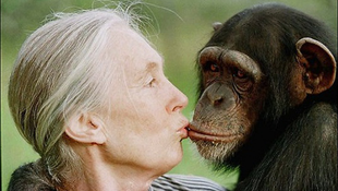 Budapesten járt Jane Goodall