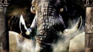 Elefántdübörgés kínrímekkel és képzavarokkal
