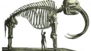 Négyfogú koponyát találtak Chilében