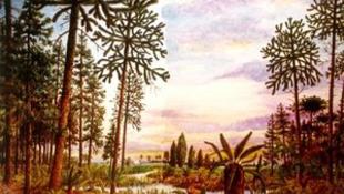 Ismeretlen ősmadarat találtak