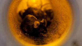 Űrkapszulába zárták az állatokat