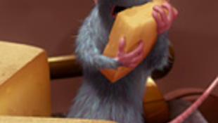 Patkány, pingvin vagy méh?