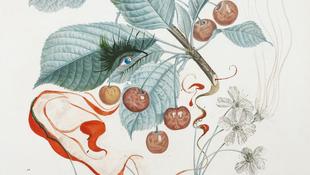 Előkerültek Dalí botanikus festményei
