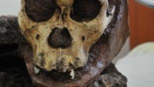 Puzzle emberi csontokból