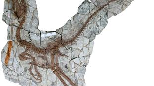 Gigantikus őslény maradványai kerültek felszínre