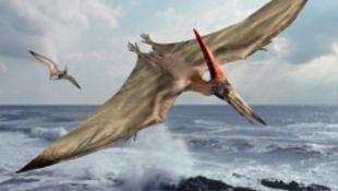 Különleges dinoszaurusz-lelet került elő