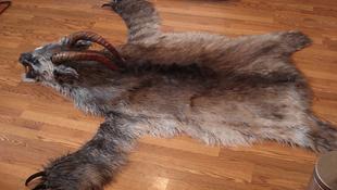 Démonbőr szőnyeget találtak