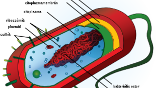 Itt az első mesterségesen előállított baktérium!