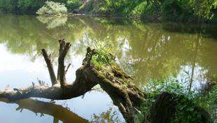 Kilenc kilométeres olajfolt úszik a Dunán