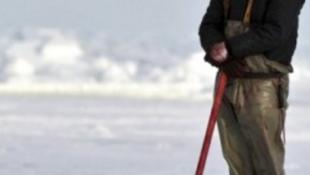 Brutális mennyiségű fókát ölnek le az idén