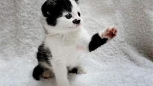 """Nincs gazdája a """"Hitler-macskának"""""""