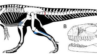 Megtaláták Európa legnagyobb dinoszauruszát