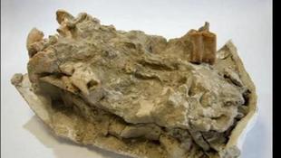 Húszmillió éves állati maradványokra bukkantak