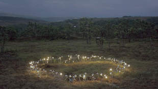 Fényt hoznak a műalkotások a természetbe