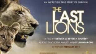 Az utolsó oroszlánokat filmezték le