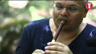 Titokzatos hangok az erdőben
