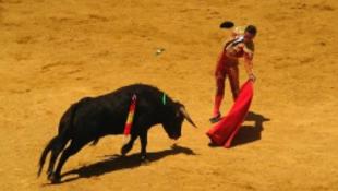 Halál vár a francia bikákra