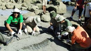 Ősi tengeri hüllőt találtak
