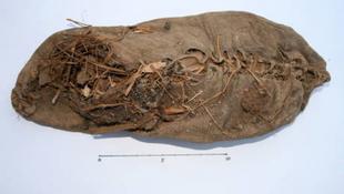 5500 éves cipőt találtak
