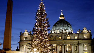 Cseh fenyőfa érkezik a Vatikánba