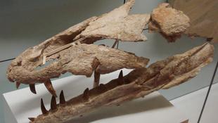 Jurakori tengeri ragadozó nyomaira bukkantak