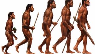 Új elmélet a homo sapiensről