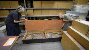 Több ezer éves csontváz a pincéből