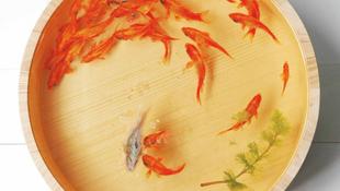 Örök életű halak Japánból