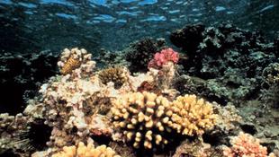 Hatalmas sziget a tengerben