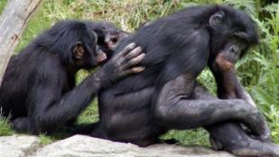 Tudja, miként szexelnek az állatok?