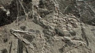 Rendkívüli őslényre bukkantak a tiroliak