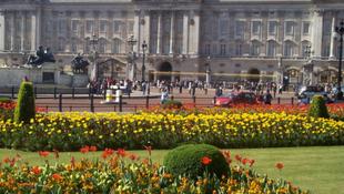 Állást hirdetett II. Erzsébet
