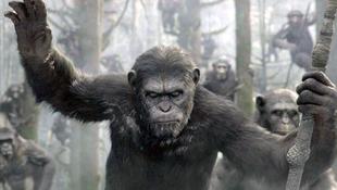 A majmok átvették az uralmat