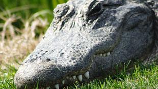 Jurassic Park lett az egyik szlovén kempingből