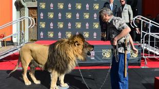 Leo otthagyta lábnyomát Hollywoodban