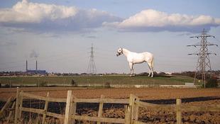 50 méter magas a világ legnagyobb lova