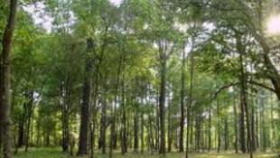 Ültess fát, hogy élhess