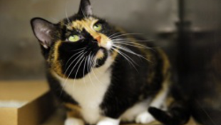 2500 kilométert utazott az szökött macska