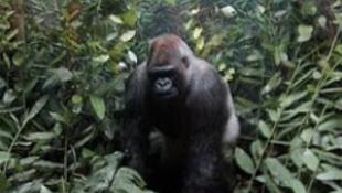 A világon elsőként, az emlősök evolúcióját bemutató tárlat nyílik