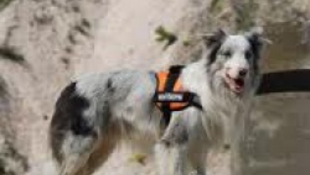 Magyar kutyák a világ élvonalában