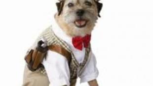 Húzzunk ruhát – a kutyára