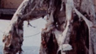 Rejtélyes lény akadt a halászok hálójába